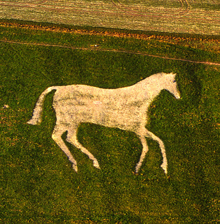 Devizes White Horse Hill Figure.  Photo by Dae Sasitorn and Adrian Warren.
